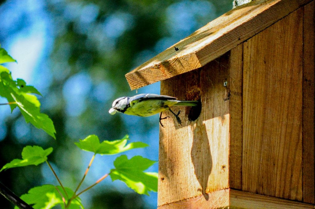 oiseau sortant-d'un nichoir en bois