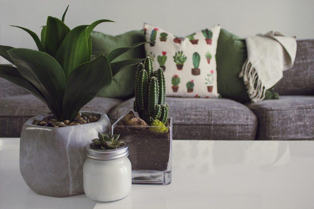 Canapé gris avec coussins clairs, table basse et plantes verte