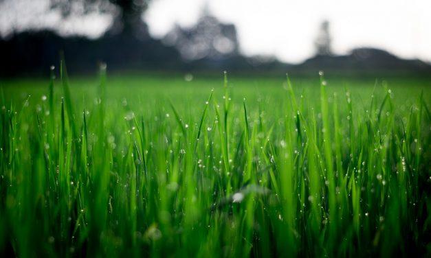 L'étude de sol est elle un diagnostic obligatoire pour la vente d'un terrain ?