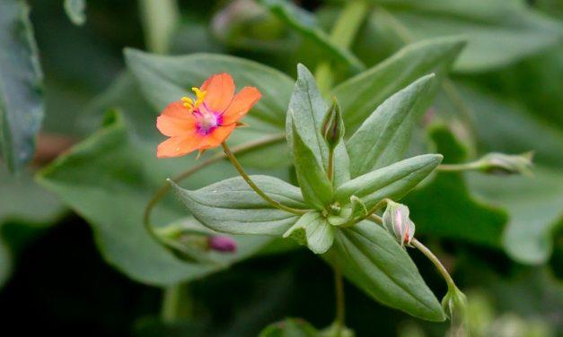 5 des Pires Mauvaises Herbes à Désherber dans le Jardin