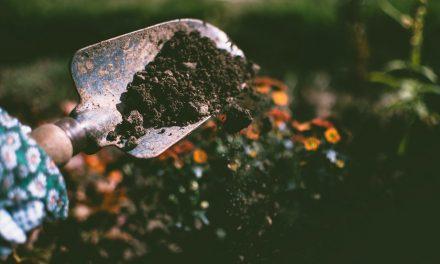 5 Méthodes Naturelles pour Désherber Votre Jardin !