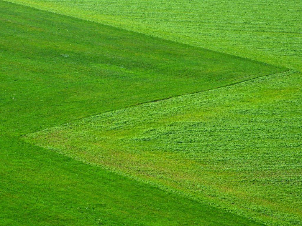 Terrain tondu herbe constructible