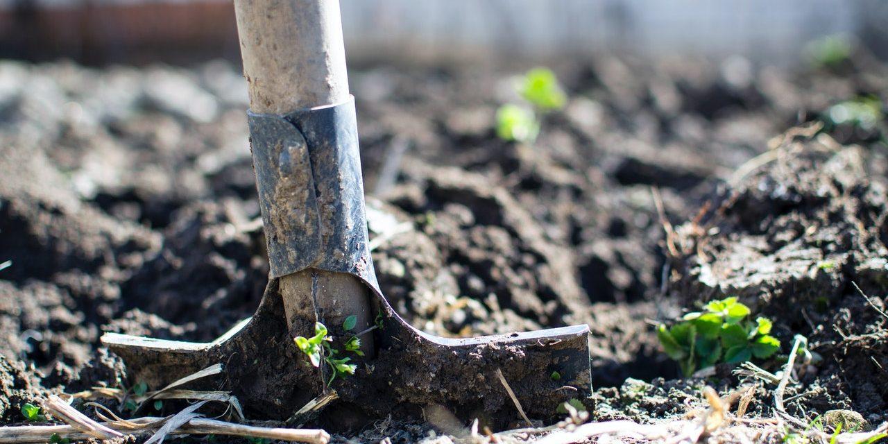 Petit Jardin – Comment Stocker son Matériel de Jardinage ?