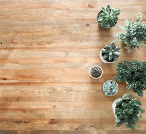Plancher clair avec plante grasse type cactus
